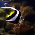 Prospek Bisnis Ikan Hias